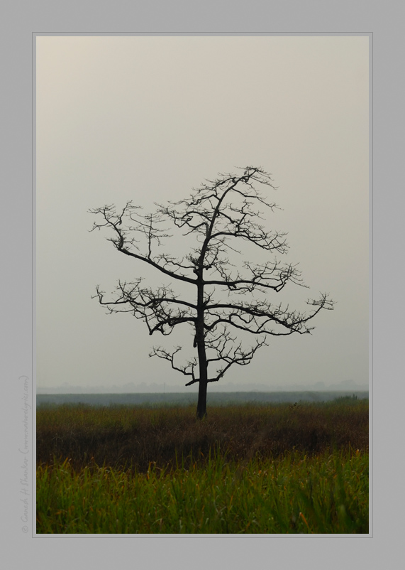 Alone - Tree | Fine Art | Creative & Artistic Nature Photography | Copyright © 1993-2017 Ganesh H. Shankar
