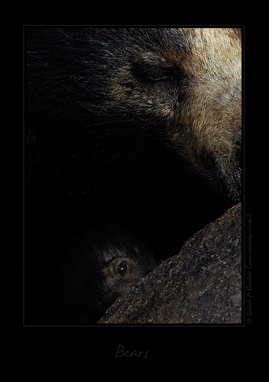 Sloth bear and its cub - a creative perspective | Fine Art | Creative & Artistic Nature Photography | Copyright © 1993-2017 Ganesh H. Shankar