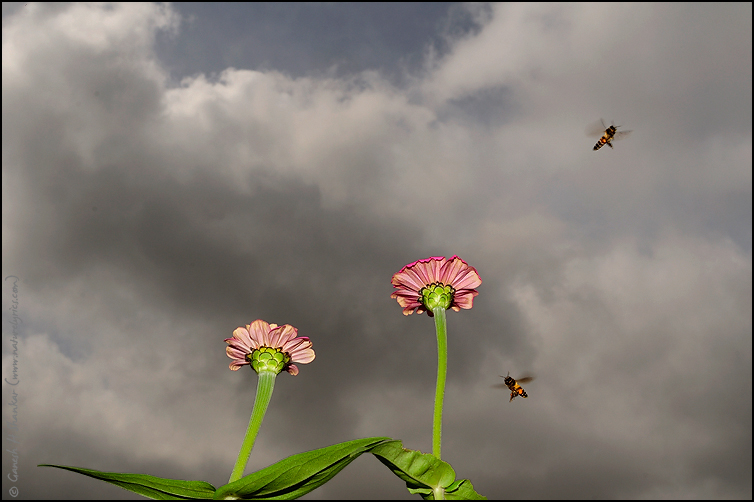 Bees' World | Fine Art | Creative & Artistic Nature Photography | Copyright © 1993-2017 Ganesh H. Shankar