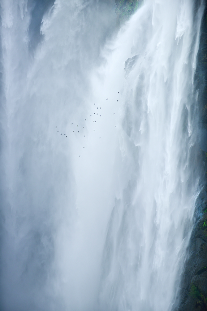 Birds and Water Fall | Fine Art | Creative & Artistic Nature Photography | Copyright © 1993-2017 Ganesh H. Shankar