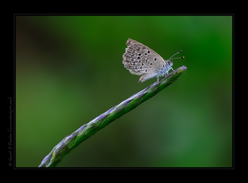 Butterfly - a perspective | Fine Art | Creative & Artistic Nature Photography | Copyright © 1993-2017 Ganesh H. Shankar
