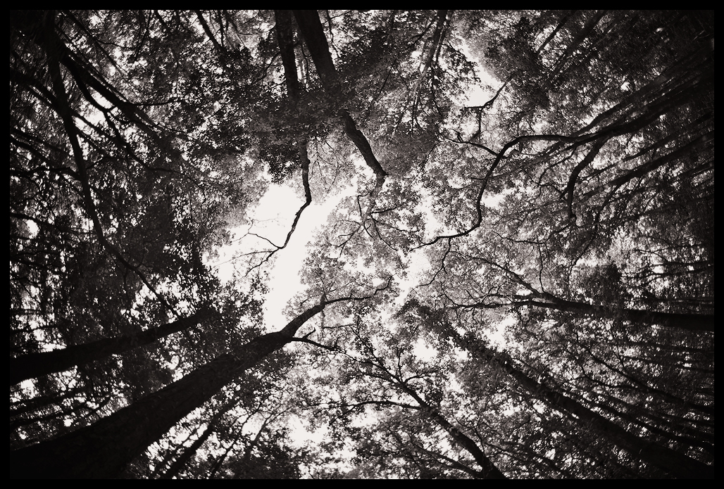 Forest Canopy | Fine Art | Creative & Artistic Nature Photography | Copyright © 1993-2017 Ganesh H. Shankar