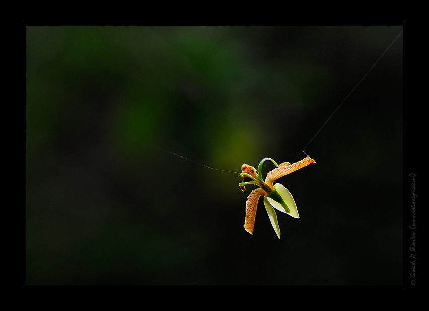 Caught in Web | Fine Art | Creative & Artistic Nature Photography | Copyright © 1993-2017 Ganesh H. Shankar