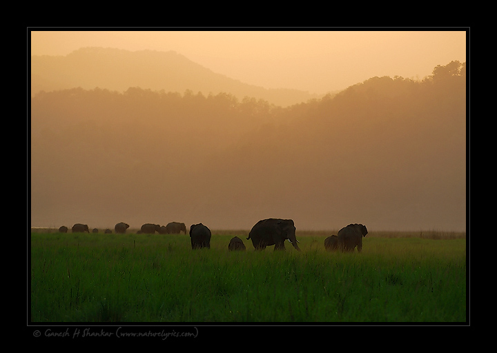 Elephants group | Fine Art | Creative & Artistic Nature Photography | Copyright © 1993-2017 Ganesh H. Shankar