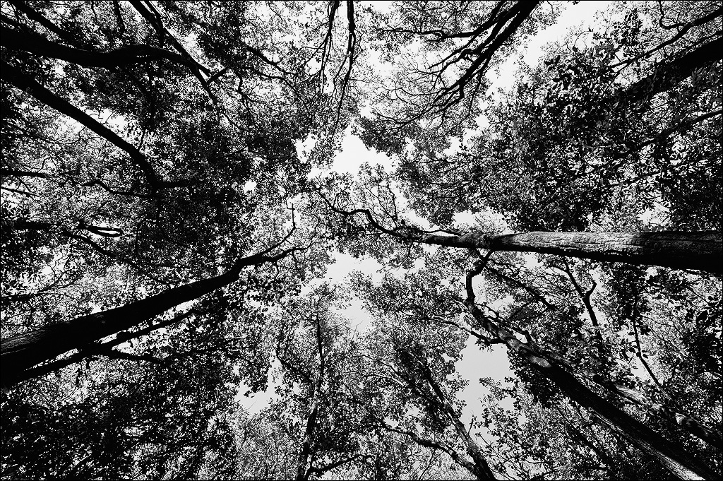 Forest Canopy, Corbet National Park, India | Fine Art | Creative & Artistic Nature Photography | Copyright © 1993-2017 Ganesh H. Shankar