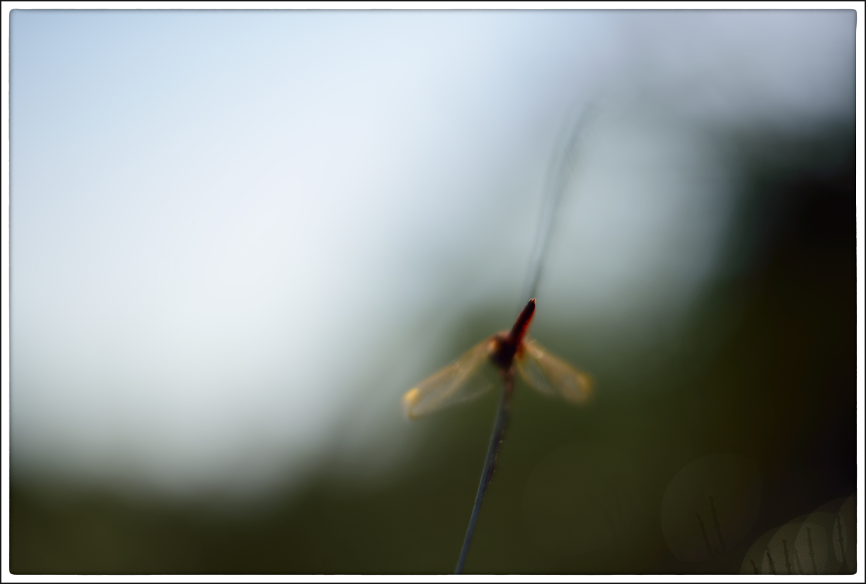 Blurs of Dragonfly | Fine Art | Creative & Artistic Nature Photography | Copyright © 1993-2017 Ganesh H. Shankar