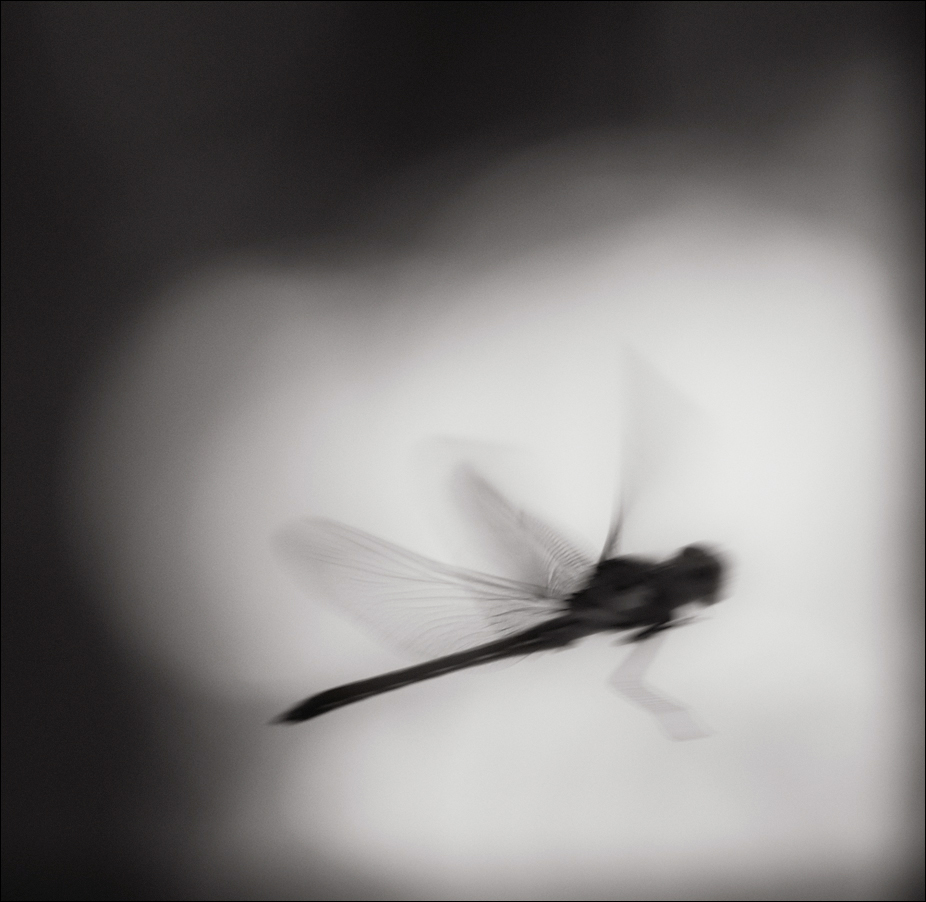 Dragonfly in Flight | Fine Art | Creative & Artistic Nature Photography | Copyright © 1993-2017 Ganesh H. Shankar