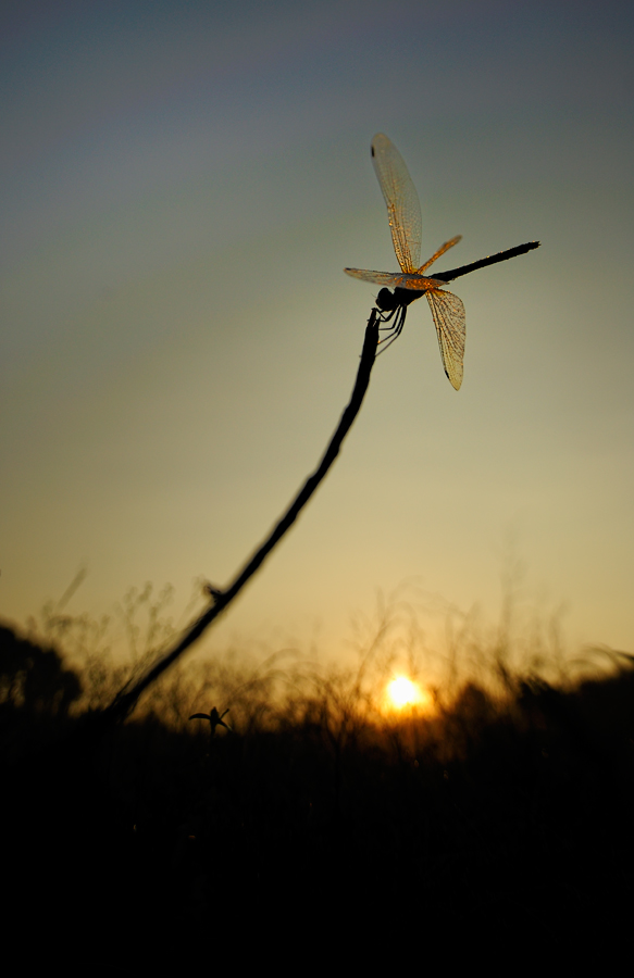 Dragonfly - A Perspective | Fine Art | Creative & Artistic Nature Photography | Copyright © 1993-2016 Ganesh H. Shankar