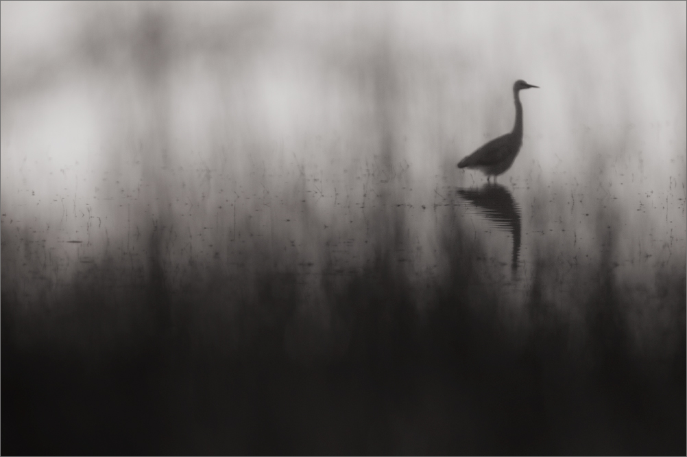 Egret in Reeds | Fine Art | Creative & Artistic Nature Photography | Copyright © 1993-2017 Ganesh H. Shankar