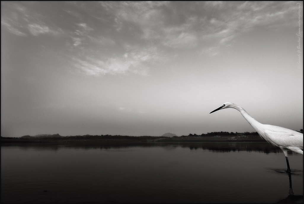 Entry of an Egret in Black and White | Fine Art | Creative & Artistic Nature Photography | Copyright © 1993-2017 Ganesh H. Shankar
