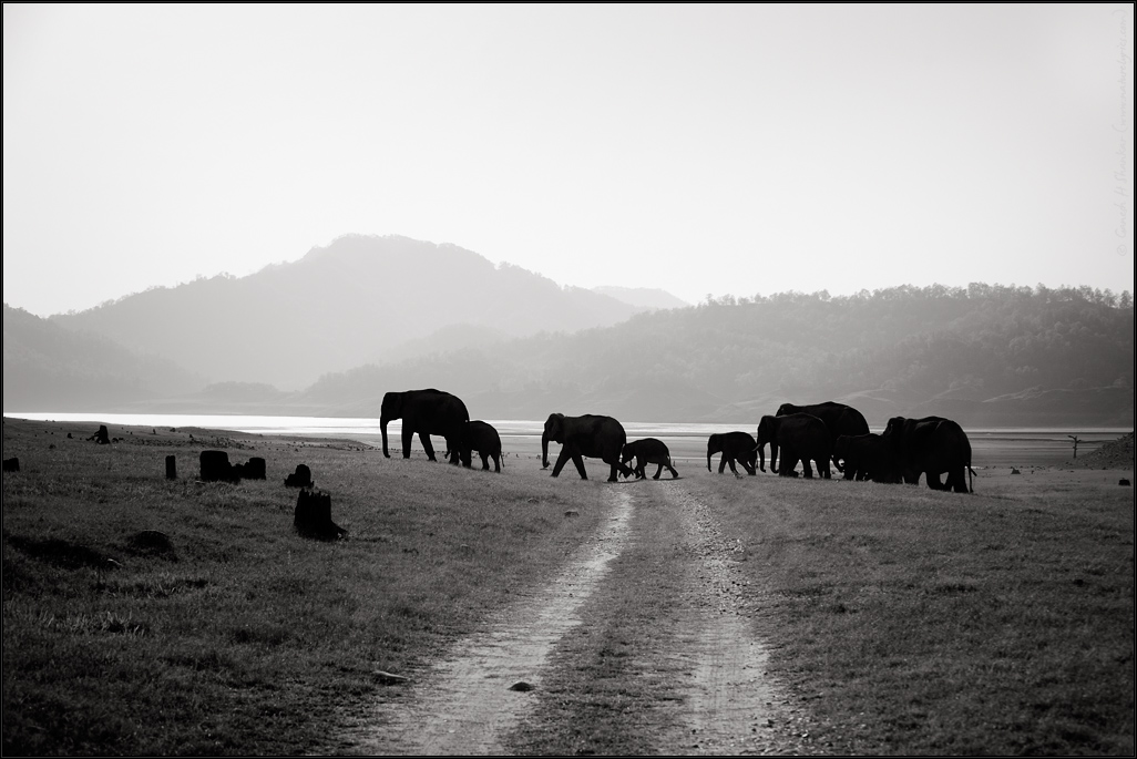 Elephants at Corbet, Corbet National Park, India | Fine Art | Creative & Artistic Nature Photography | Copyright © 1993-2017 Ganesh H. Shankar