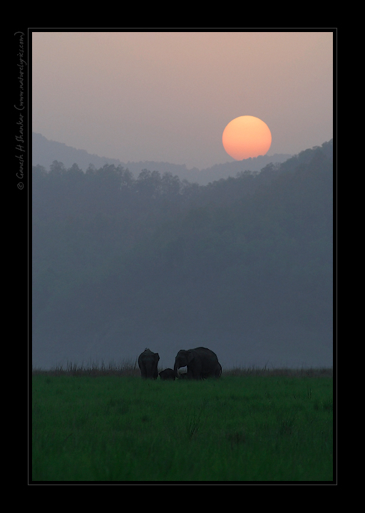 Sunset and Elephants | Fine Art | Creative & Artistic Nature Photography | Copyright © 1993-2017 Ganesh H. Shankar