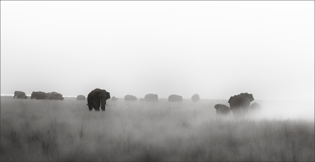 Elephants in Grasslands of Corbet National Park | Fine Art | Creative & Artistic Nature Photography | Copyright © 1993-2017 Ganesh H. Shankar