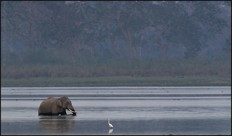 Elephant in Water | Fine Art | Creative & Artistic Nature Photography | Copyright © 1993-2017 Ganesh H. Shankar