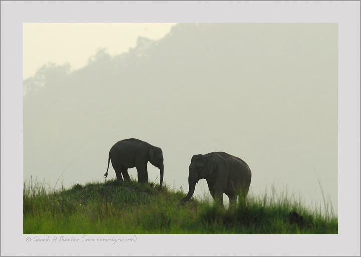 Indian Elephants at Corbet National Park, India | Fine Art | Creative & Artistic Nature Photography | Copyright © 1993-2017 Ganesh H. Shankar