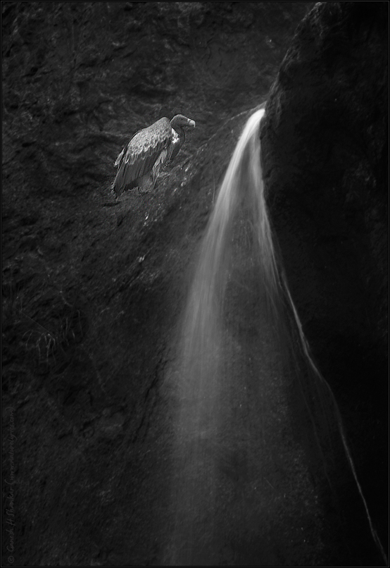 Falls and Vulture | Fine Art | Creative & Artistic Nature Photography | Copyright © 1993-2017 Ganesh H. Shankar