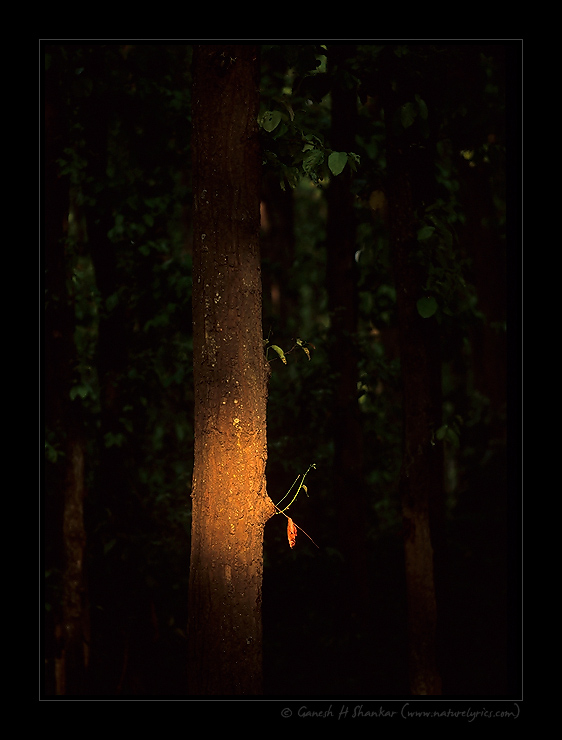 Light inside Jungle | Fine Art | Creative & Artistic Nature Photography | Copyright © 1993-2017 Ganesh H. Shankar