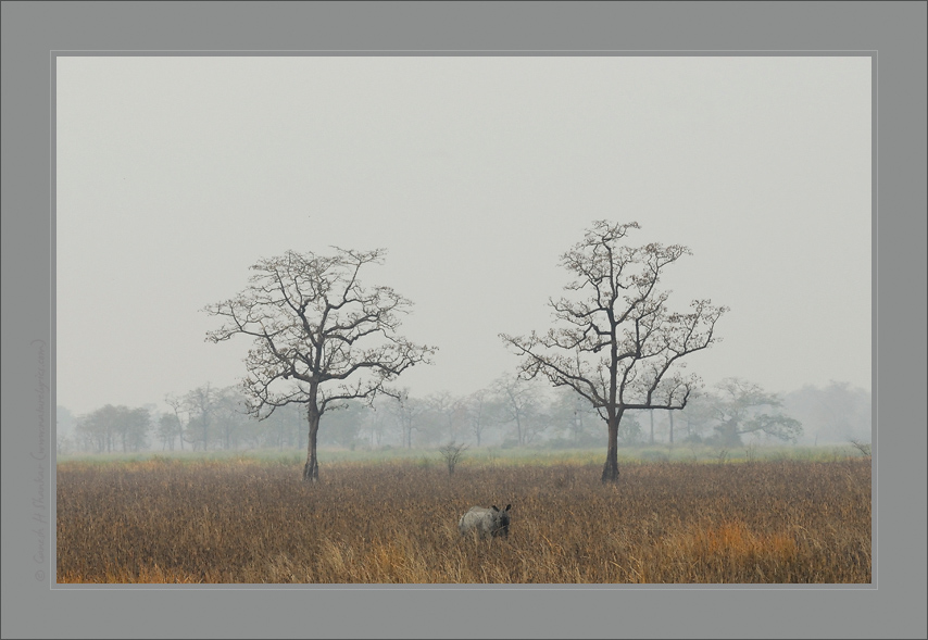 Kaziranga Grassland with a Rhino | Fine Art | Creative & Artistic Nature Photography | Copyright © 1993-2017 Ganesh H. Shankar