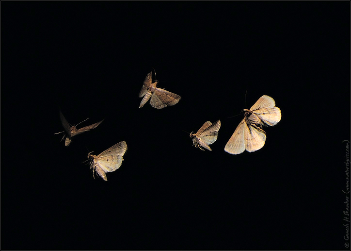 Moth Flying Out Of Wal...