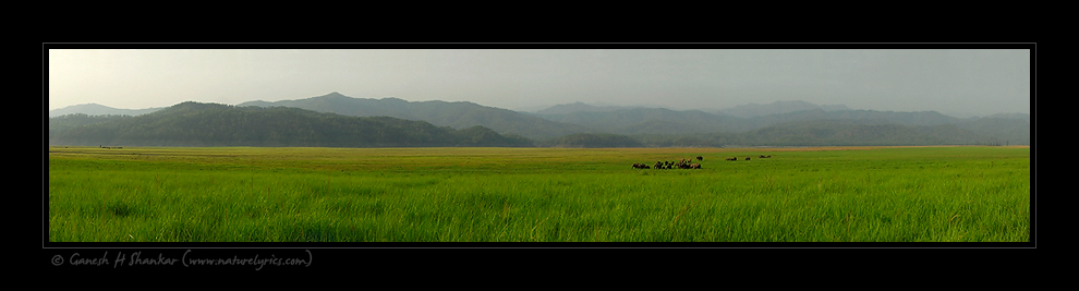 Dhikala Grassland, Corbet National Park, India | Fine Art | Creative & Artistic Nature Photography | Copyright © 1993-2017 Ganesh H. Shankar