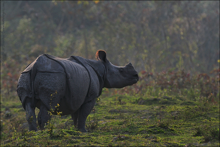 One Horned Rhino, Kaziranga National Park | Fine Art | Creative & Artistic Nature Photography | Copyright © 1993-2017 Ganesh H. Shankar