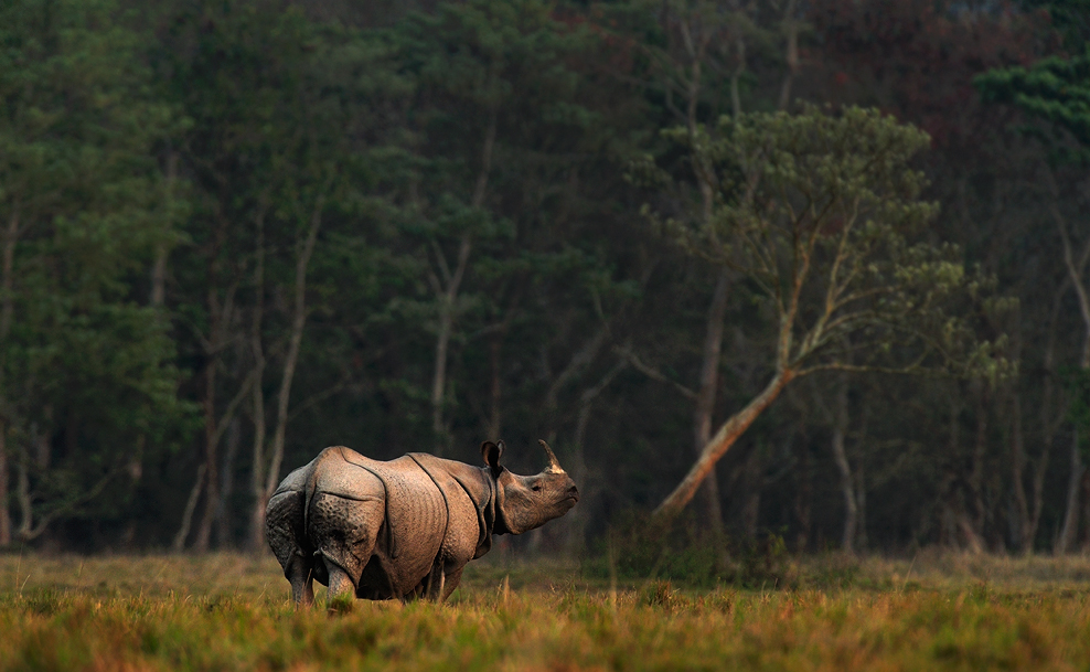 One Horned Rhino, Kaziranga National Park | Fine Art | Creative & Artistic Nature Photography | Copyright © 1993-2016 Ganesh H. Shankar