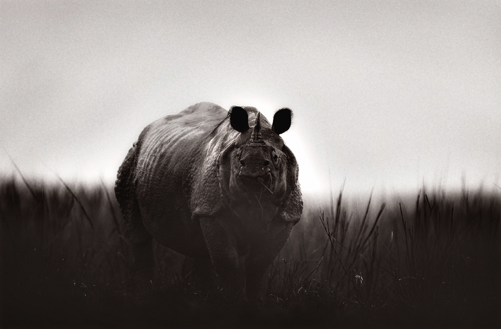 Rhino, Kaziranga National Park, India | Fine Art | Creative & Artistic Nature Photography | Copyright © 1993-2017 Ganesh H. Shankar