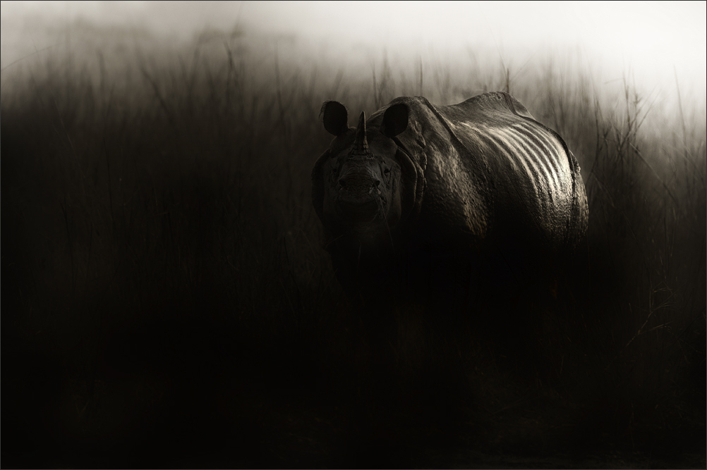 Rhino - A Portraits  | Fine Art | Creative & Artistic Nature Photography | Copyright © 1993-2017 Ganesh H. Shankar