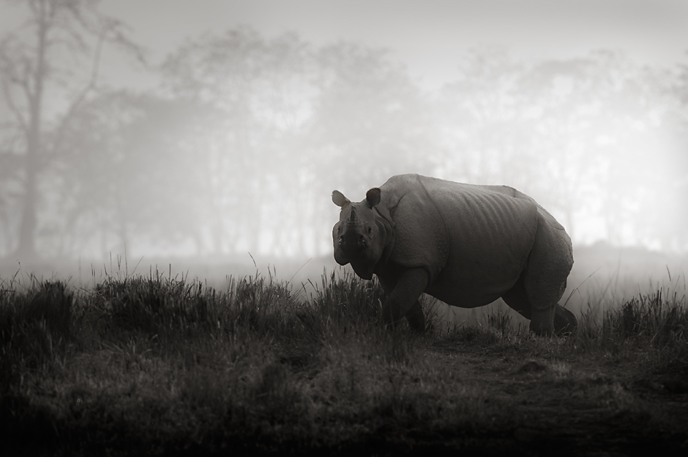 Rhino - Look  | Fine Art | Creative & Artistic Nature Photography | Copyright © 1993-2017 Ganesh H. Shankar