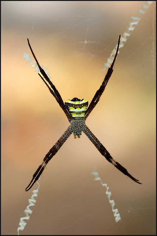 Signature Spider | Fine Art | Creative & Artistic Nature Photography | Copyright © 1993-2017 Ganesh H. Shankar