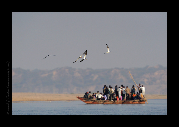 Skimmers and People of Chambal  | Fine Art | Creative & Artistic Nature Photography | Copyright © 1993-2017 Ganesh H. Shankar