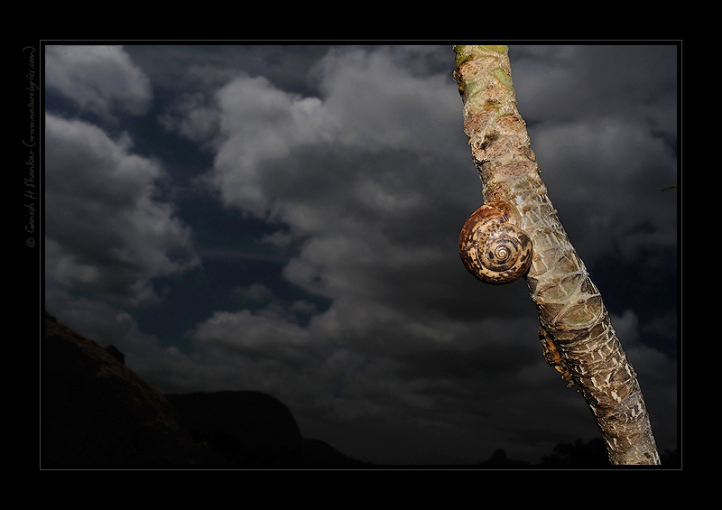 Snail on a Clouds at Ramnagar | Fine Art | Creative & Artistic Nature Photography | Copyright © 1993-2017 Ganesh H. Shankar