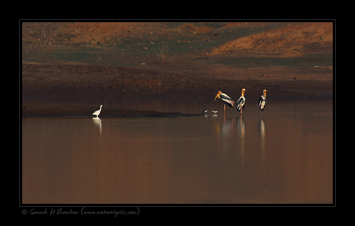 Painted Storks | Fine Art | Creative & Artistic Nature Photography | Copyright © 1993-2017 Ganesh H. Shankar