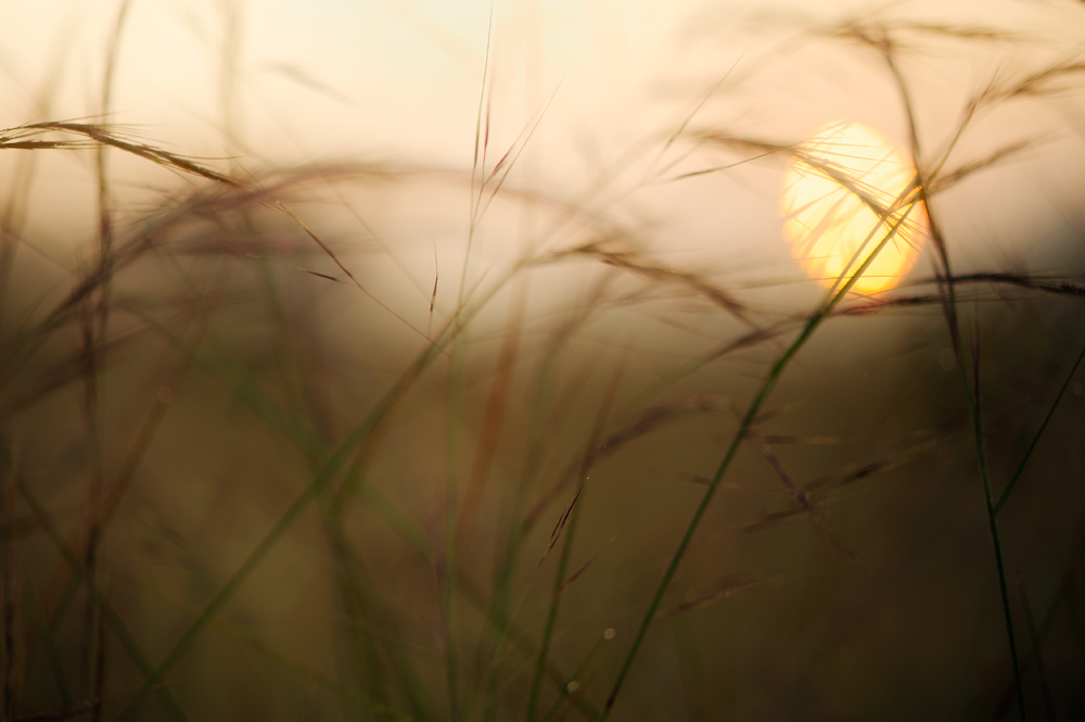Sunrise in Grassland | Fine Art | Creative & Artistic Nature Photography | Copyright © 1993-2017 Ganesh H. Shankar