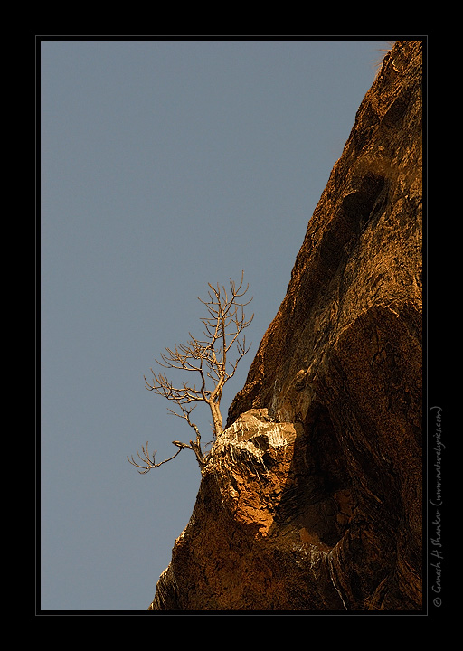 Tree on Ridge | Fine Art | Creative & Artistic Nature Photography | Copyright © 1993-2017 Ganesh H. Shankar