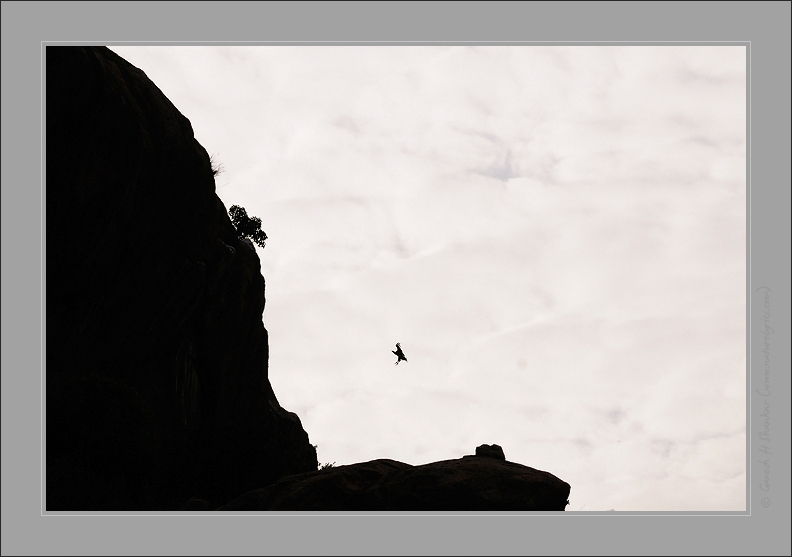 Vulture and Cliff | Fine Art | Creative & Artistic Nature Photography | Copyright © 1993-2017 Ganesh H. Shankar