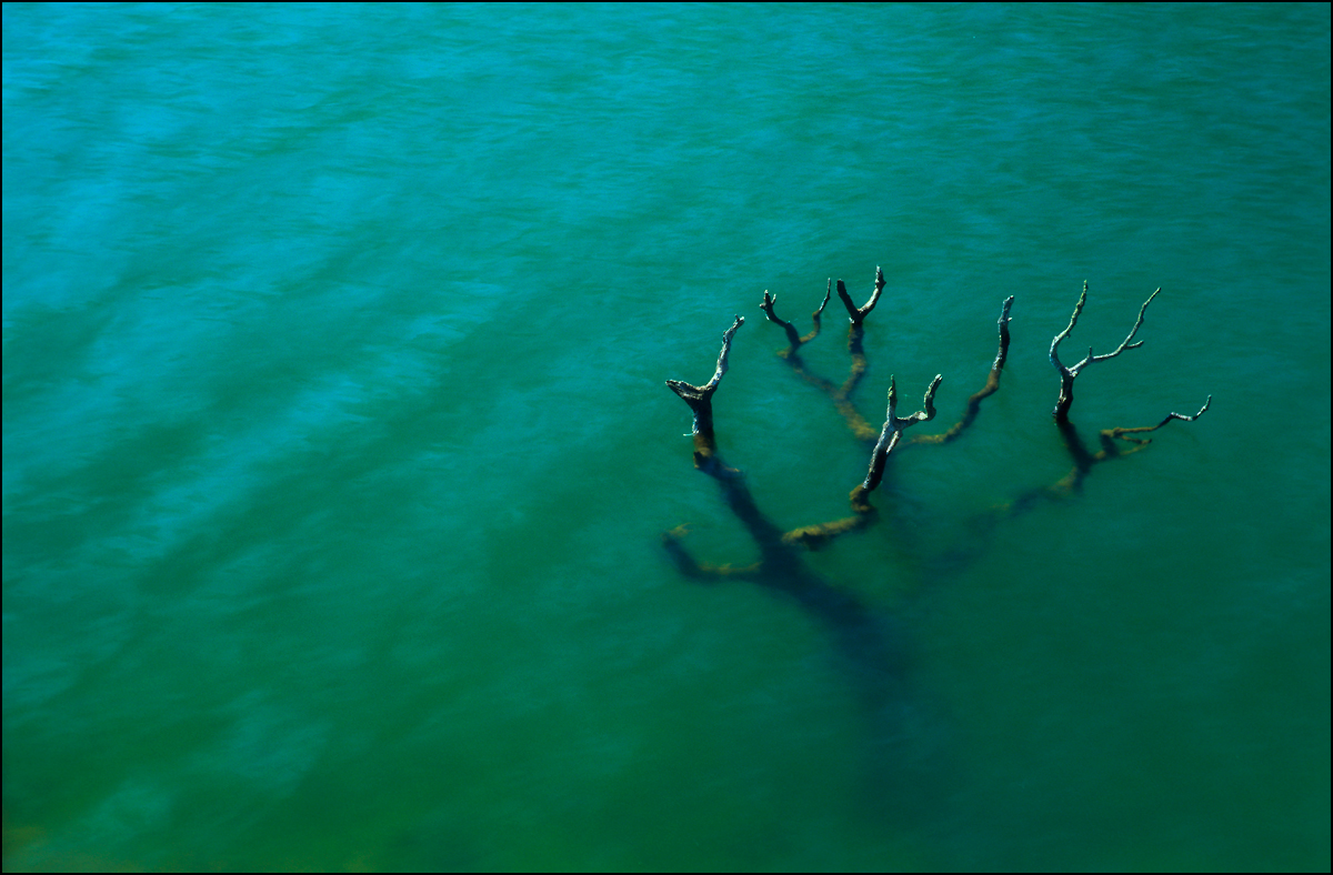 Tree in Water | Fine Art | Creative & Artistic Nature Photography | Copyright © 1993-2017 Ganesh H. Shankar