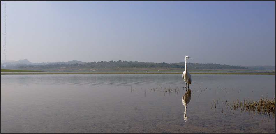 Egret in Lake | Fine Art | Creative & Artistic Nature Photography | Copyright © 1993-2017 Ganesh H. Shankar