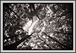 Forest Canopy | bw Fine Art Nature Photography