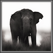 Elephant Portrait | bw Fine Art Nature Photography