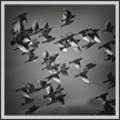 Starlings | bw Fine Art Nature Photography