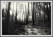 Sal Forest  | bw Fine Art Nature Photography