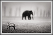 Barking Deer and Elephant | bw Fine Art Nature Photography