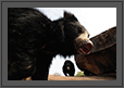 Bear Framed | creative_visions Fine Art Nature Photography
