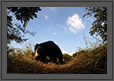 Sloth Bear - Wider Perspective  | daroji Fine Art Nature Photography