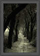 Journey Ahead - Path inside Bharatpur Bird Sanctuary | creative_visions Fine Art Nature Photography