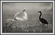 | avian Fine Art Nature Photography