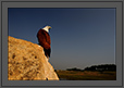 Brahmini Kite - A wider perspective | creative_visions Fine Art Nature Photography