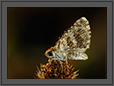 Butterfly at Sunrise | macro Fine Art Nature Photography