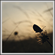 Butterfly and Sunrise  | color Fine Art Nature Photography